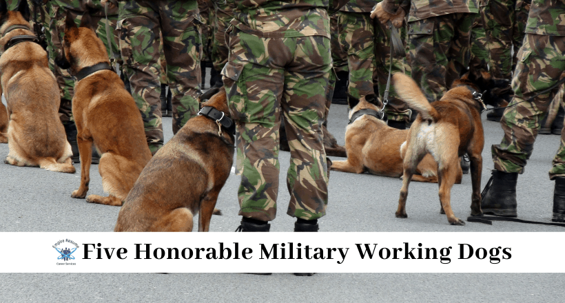 Famous Dogs in the Military